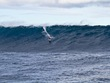 Mick_curley_photo_stormsurfers_turtle_wa-7880